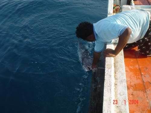 ตามล่าปลาทรายแดง(6)