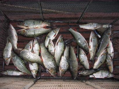 เขื่อนศรีนครินทร์ 17-18มีนา50 ขอเชิญร่วมทริปตกปลา