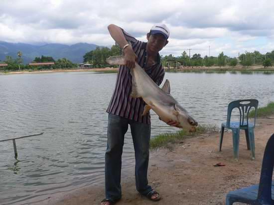 ปลาบึกบ่อเอก จังหวัดจันทบุรี