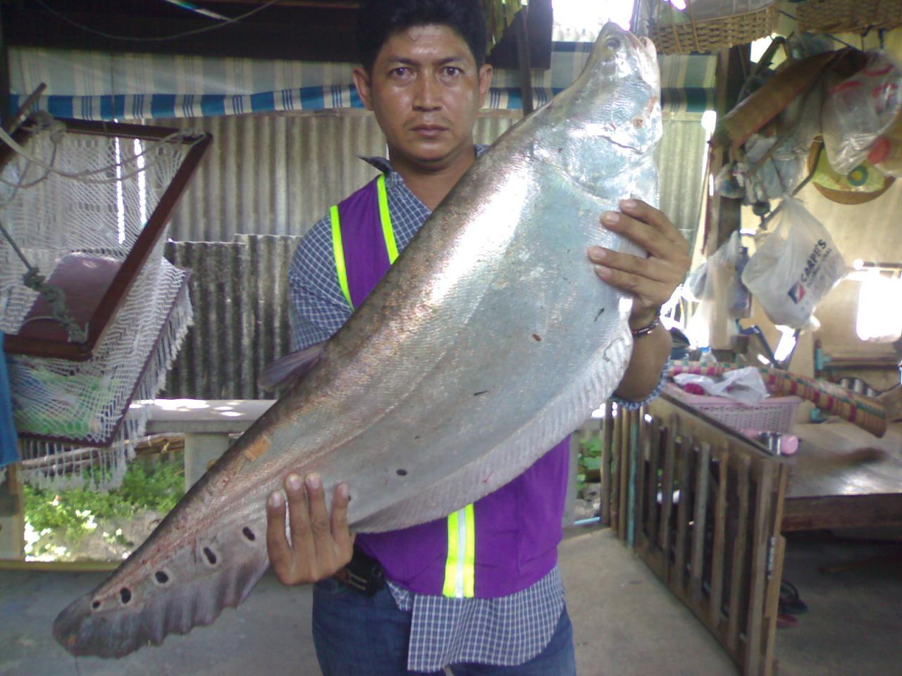 ใครขอสูตรตกปลากราย..เข้ามาดูครับ