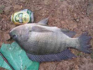 เทคนิค การตกปลาเกล็ด ชิงหลิว+สะปิ๋ว