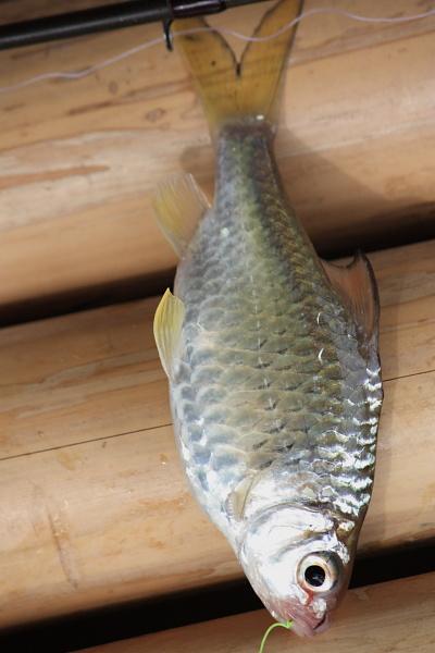 ปลาอะไรเอ่ย(รบกวนน้าจีรชัย)