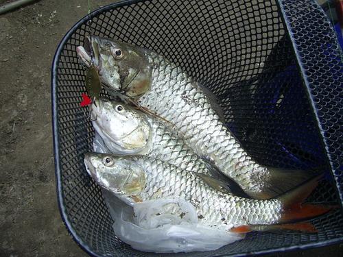 ตกปลาแม่น้ำปิง ครั้งแรกที่ จ.ตาก