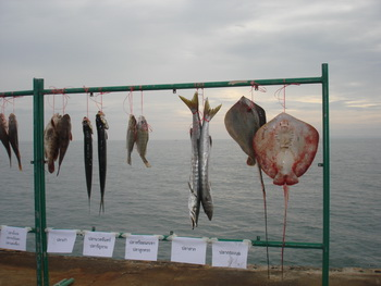 แข่งตกปลาคลองใหญ่
