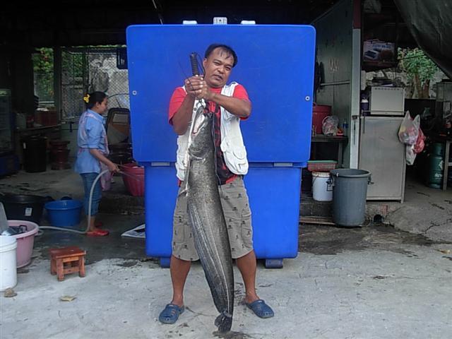ปลาเค้าสังขละ