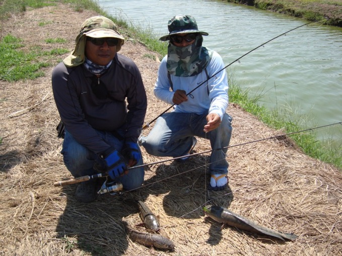ทริพพิเศษ บ่อเลี้ยงปลาช่อน บางคล้า (ปิดรับจอง)