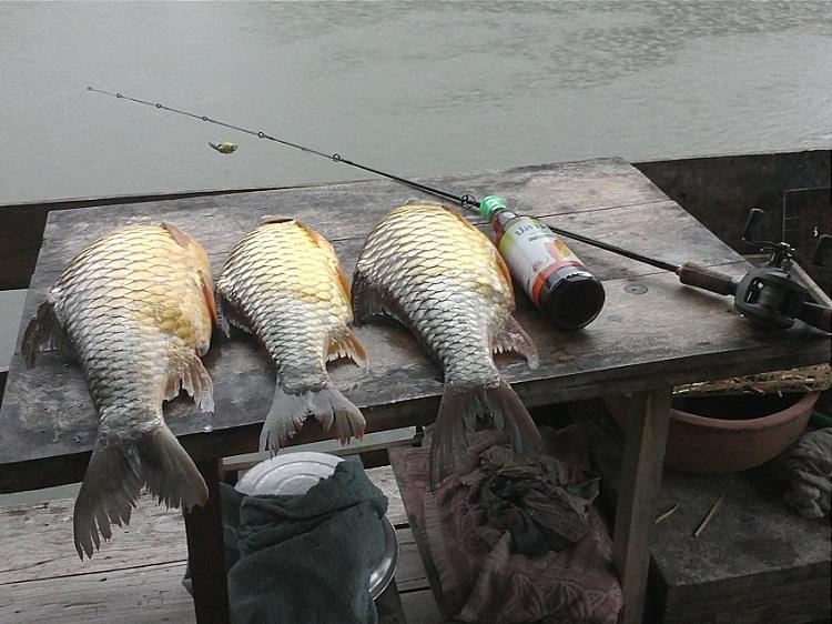 ปลาไชค์ใหญ่บ้านตาก 5-5-55