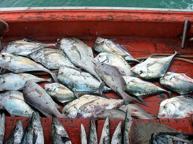 หาเพื่อนตกปลา2-3 คน ทริพเร่งด่วน หมายเอ๊กโซเซ่ ไต๋นรงค์ ปราณบุรี วันที่ 12-13 พย