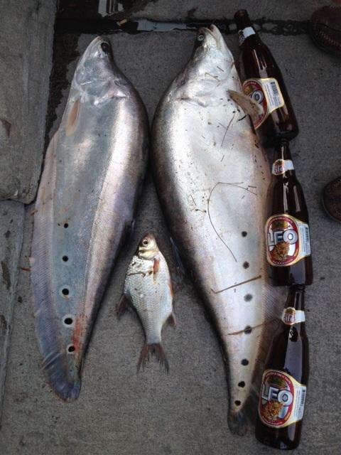 ปลากรายสามเมนู