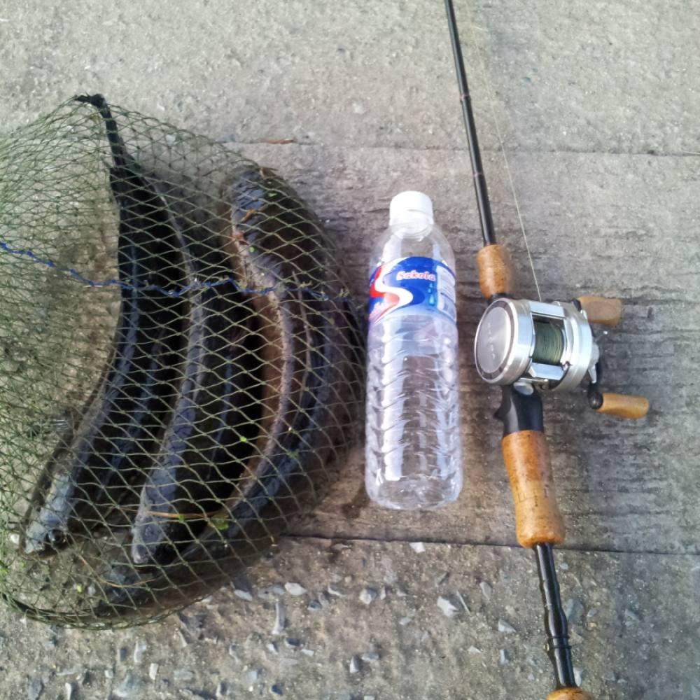 วันว่างๆกับปลายาง