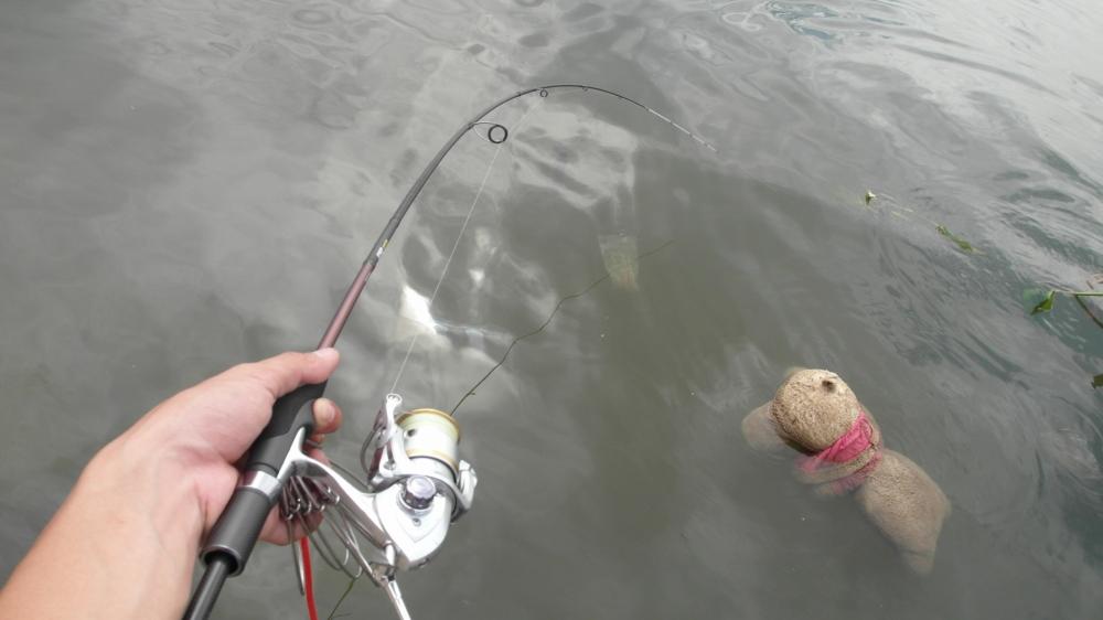 หลายคนตั้งคำถามมา การตกปลาแบบ LRF ใช้คันแบบไหน
