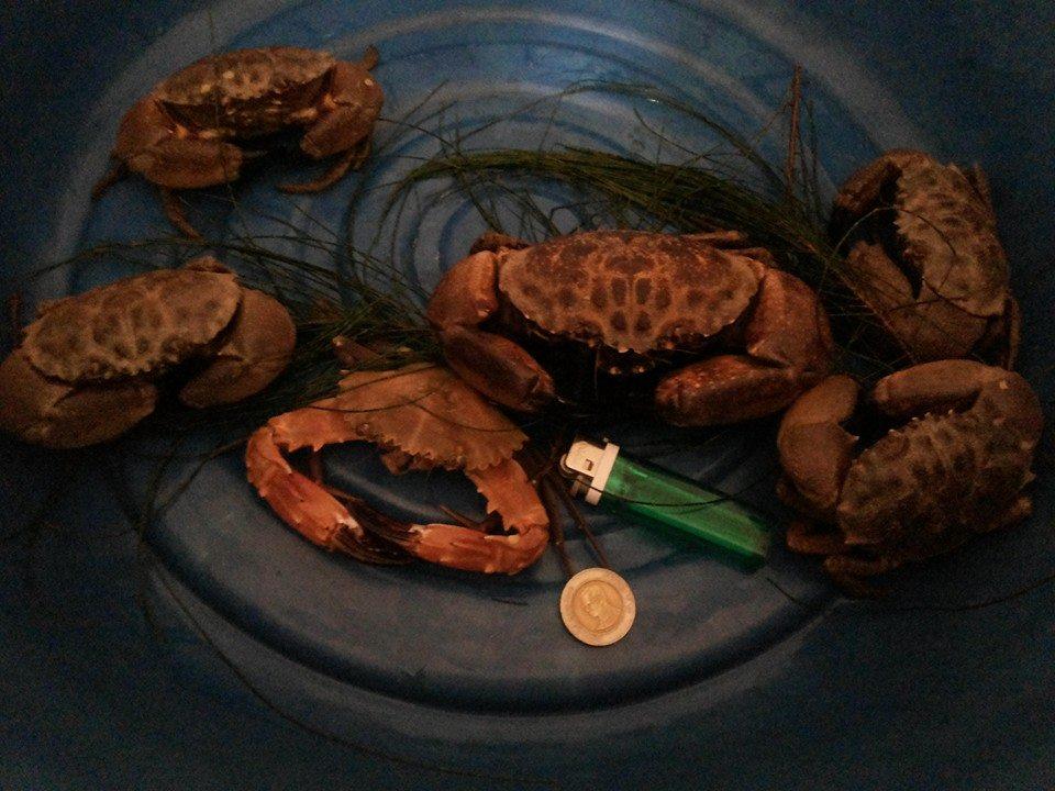 เมนูปูคนจนครับ หาเอง ผัดน้ำพริกเผาบ้าน ๆ เอง +ข้าวผัดปูบ้าน ๆ