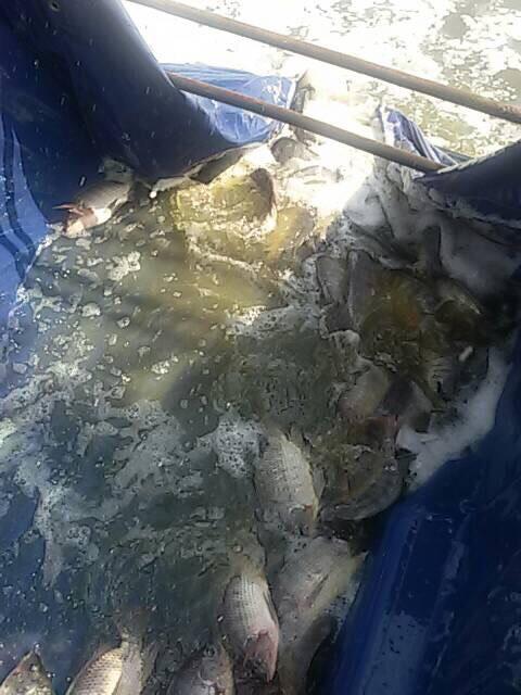 บ่อเพื่อชีวิต ลงปลาเพิ่มอีกแล้วนะ รู้ยัง
