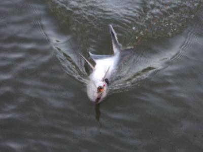 อยากตกปลาแม่น้ำเจ้าพระยา