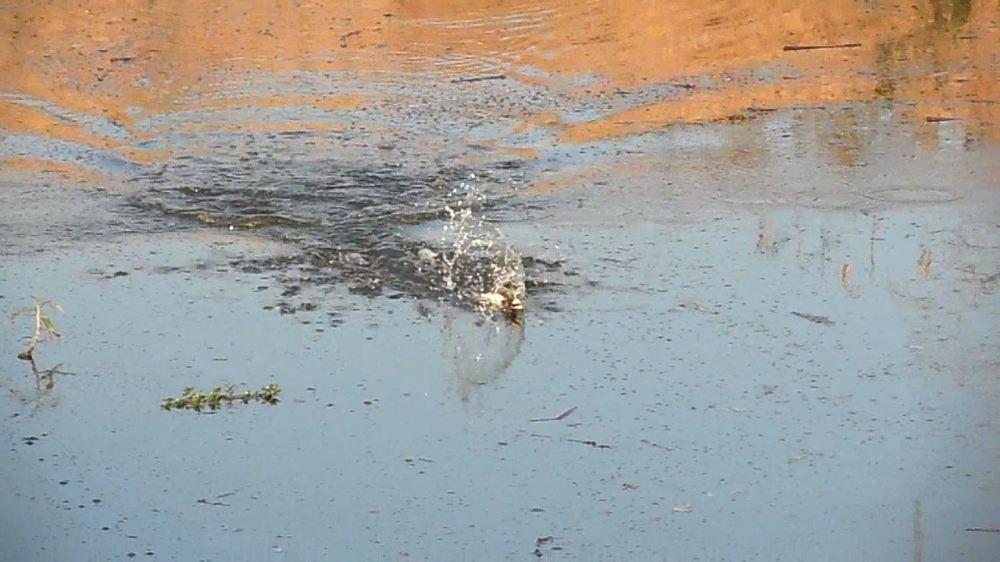 เปิดเกมด้วยกบกระโดด............ปิดเกมด้วยหยดน้ำ.........ยั่วโมโหไอ้ช่อนโหด....^^