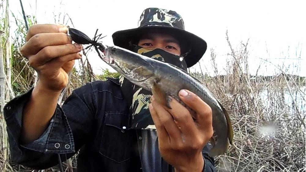 อะไรกัน..........เอาอีกแล้ว.............ปลาที่หลุดมักใหญ่เสมอ................ ^^