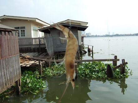สอบถามร้านไหนขายเหยื่อกุ้งเป็นตกปลาทะเล แถวศรีราชา ชลบุรี บ้างครับ