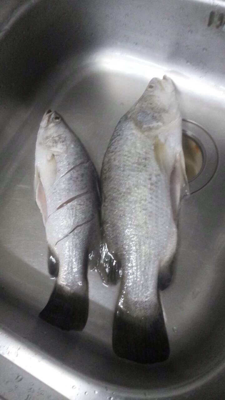 การเกี่ยวกุ้งเป็นตกปลากระพง