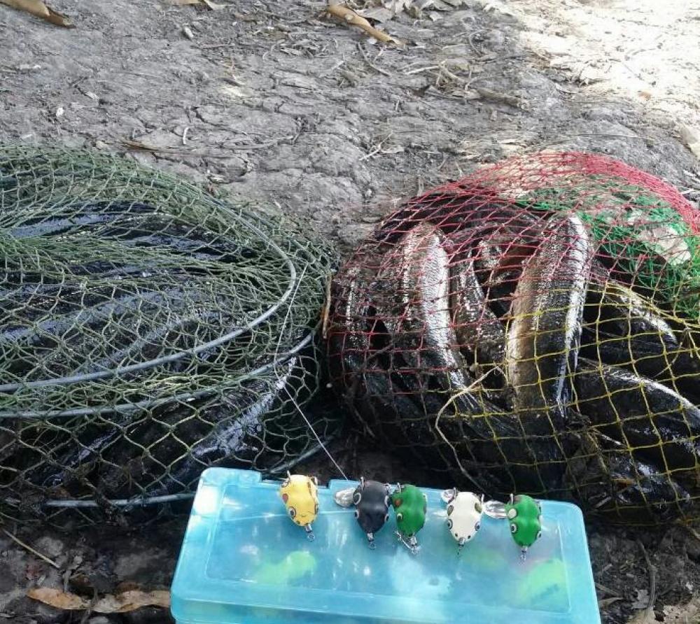 ช่อนบ่อสลิด ช่วงนาทีทอง กบยาง เย็น เย็น 3.8 CM by MT Fish
