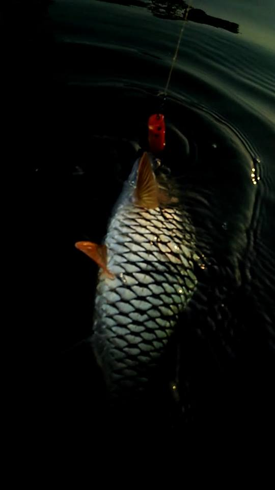 มาแล้วตกปลาลำน้ำก่ำภาค2