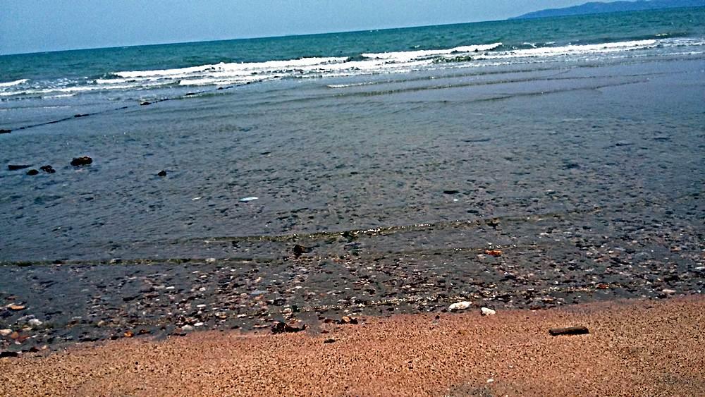 สดจากทะเล
