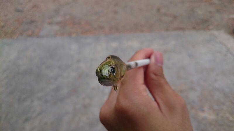 ลูกปลาหมอ รึป่าว??
