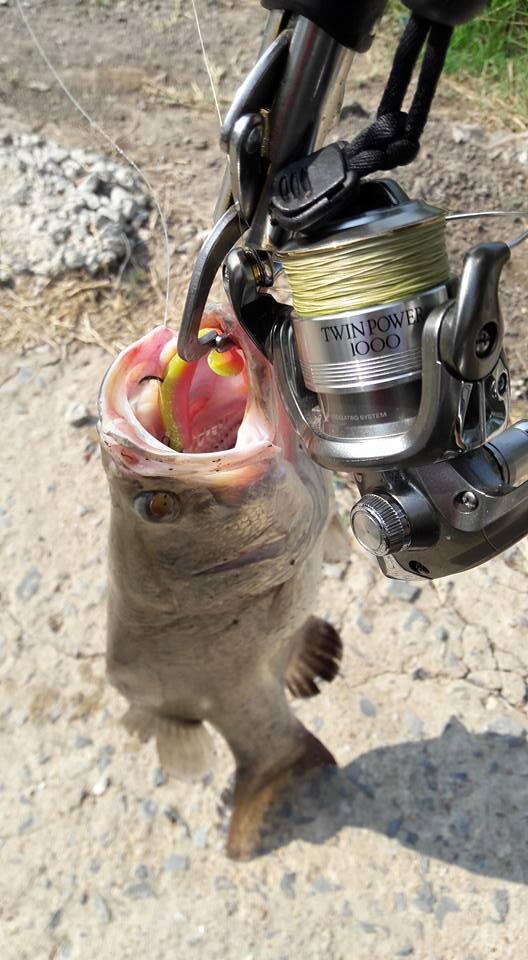 ทำไมเวลาปลากัดเหยื่อ แล้ววัดสวนแขนหมุนมันชอบหมุนกลับหลัง