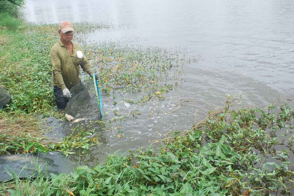 บ่อตกปลาลุงตี๋บางวัว(บ่อปลารวม)ลงปลาอีกแล้ว 2/7/59