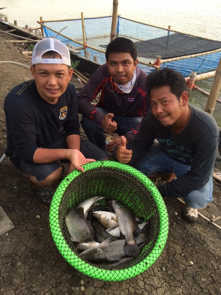 บ่อพี่กุ้ง สาขลา ลงปลาแล้ว