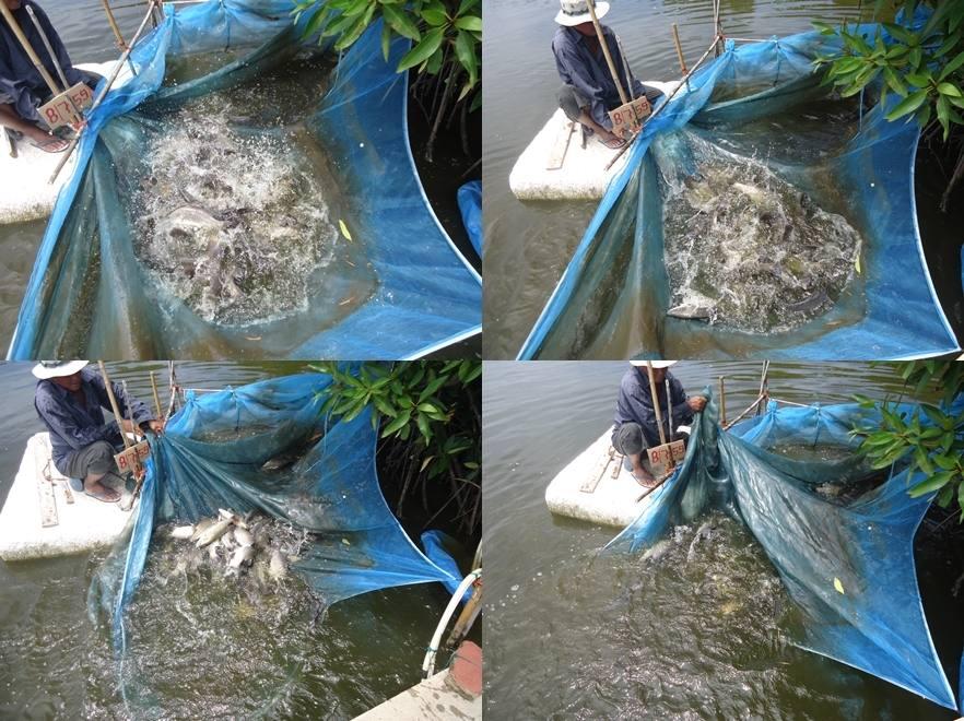 ##บ่อตกปลาเจ้เพ็ญ##