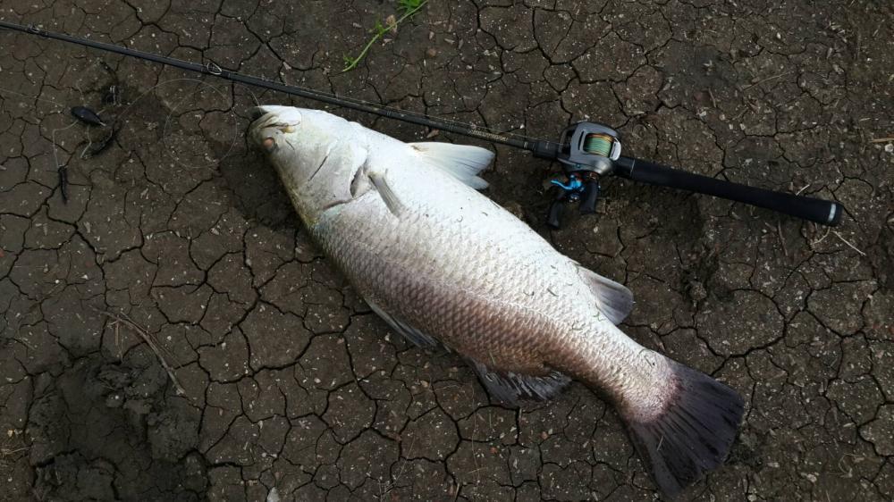 ( ผลงาน ปลาฝูง กับ ปลาวัง เก่า ๆ เน่าๆ ณ.บางขุนเทียน  )
