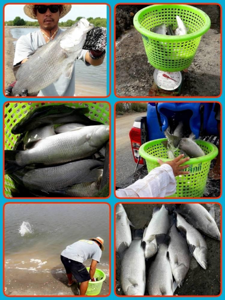 ♡♡♡♡วังกระพงน้าตุ๊.ลงปลาใหม่แล้วครับ♡♡♡♡รูป