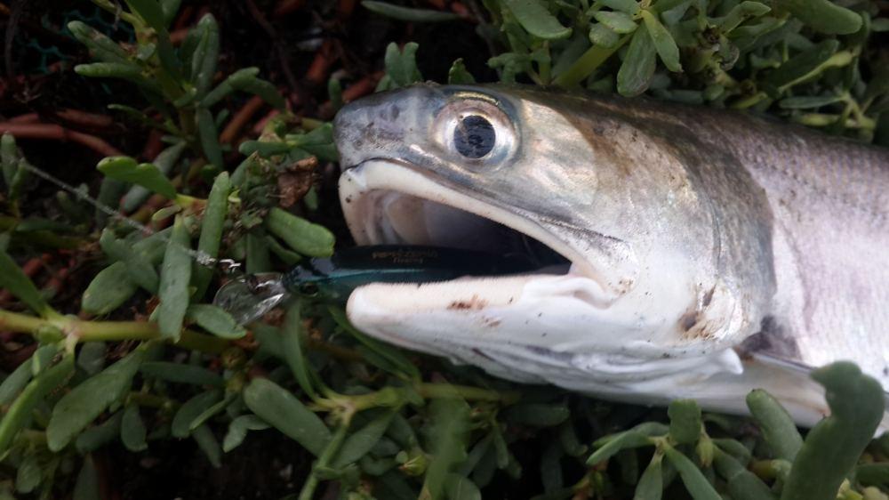 (( น้องอยากกินปลาเค็ม ))