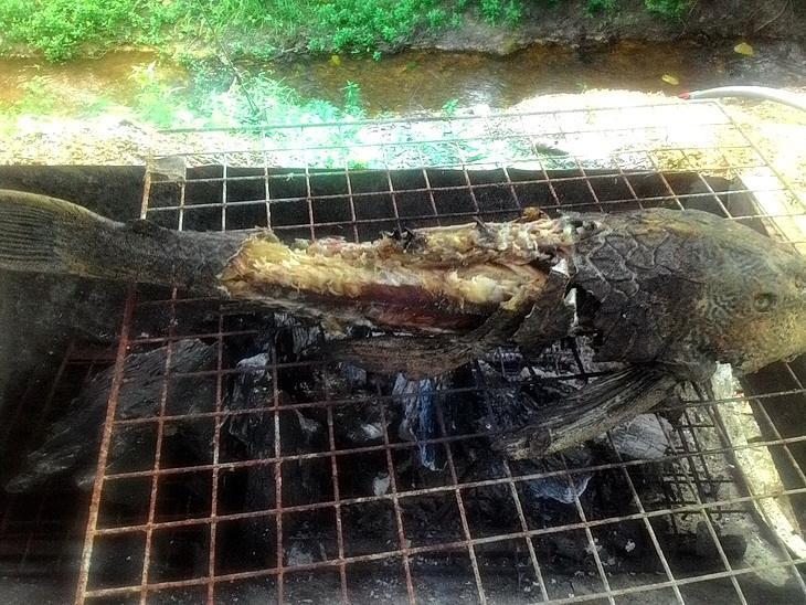 แกงป่า(แห้ง)ปลาซัคเกอร์ใบชะพลู