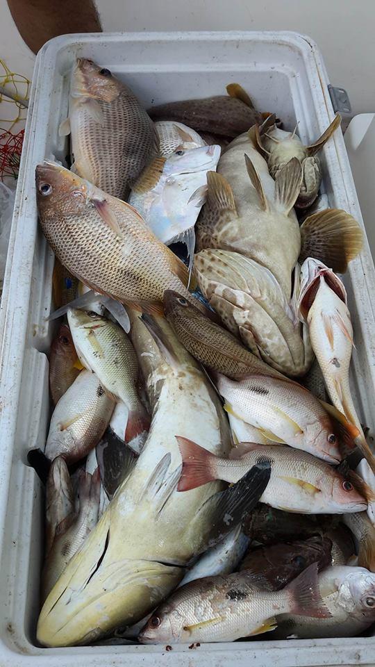 สงขลาหาปลาแกง 16 10 59