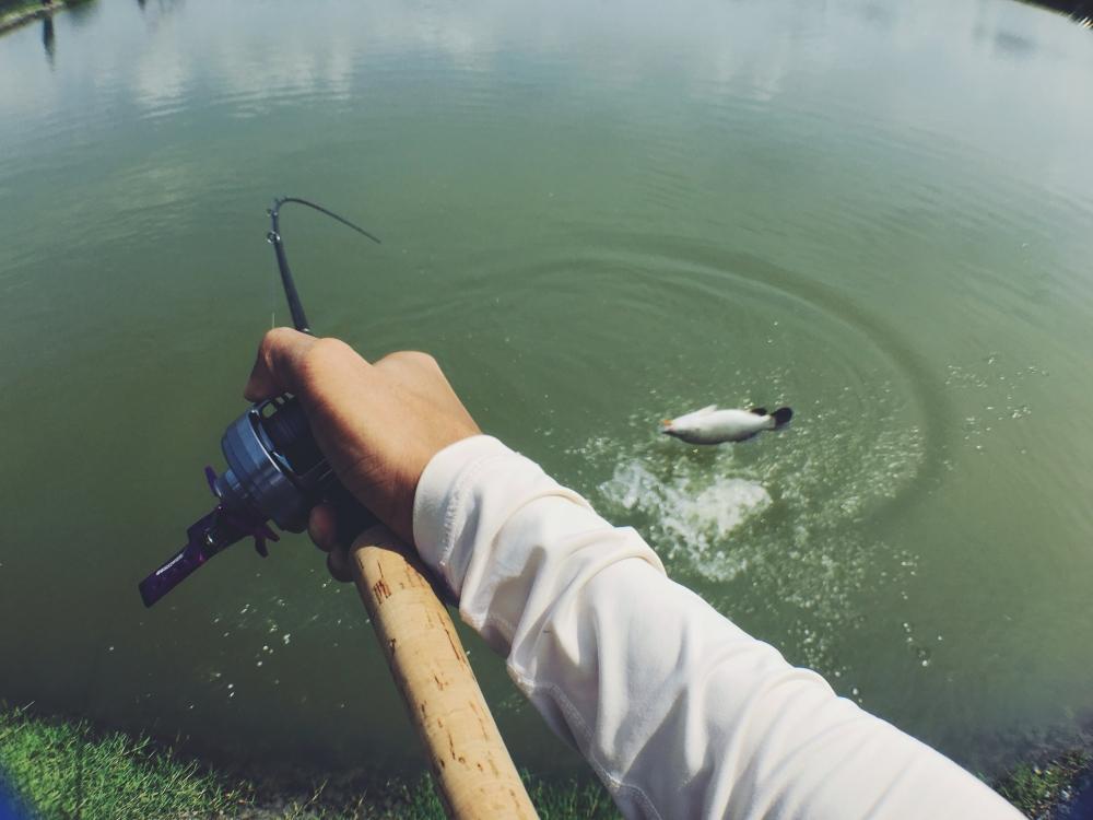 น้าๆที่อยู่แถวเกษตร ไปตกปลากะพงที่บ่อไหนกันบ้างครับ