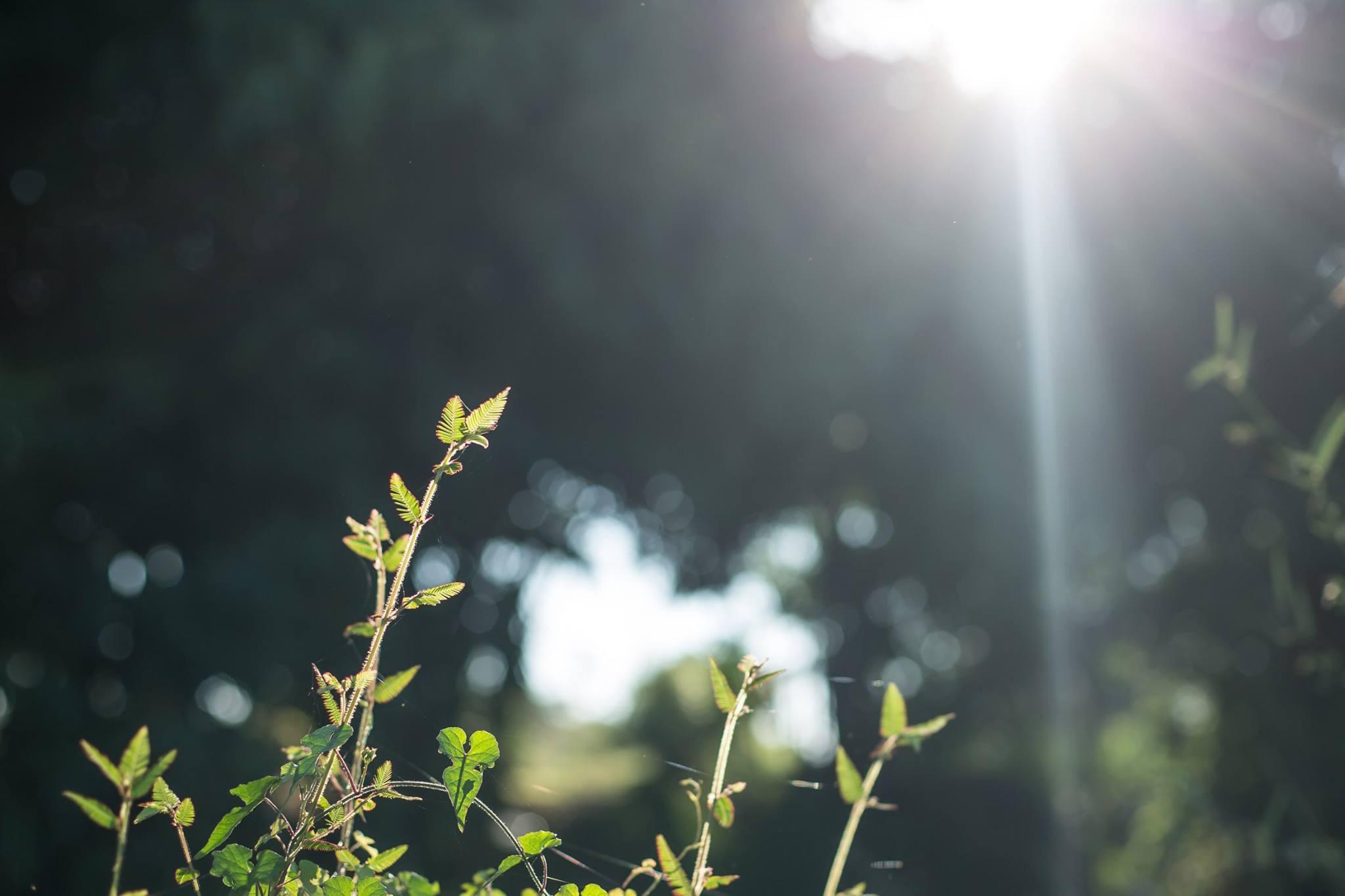 แสงพระอาทิตย์พาไปหลิว
