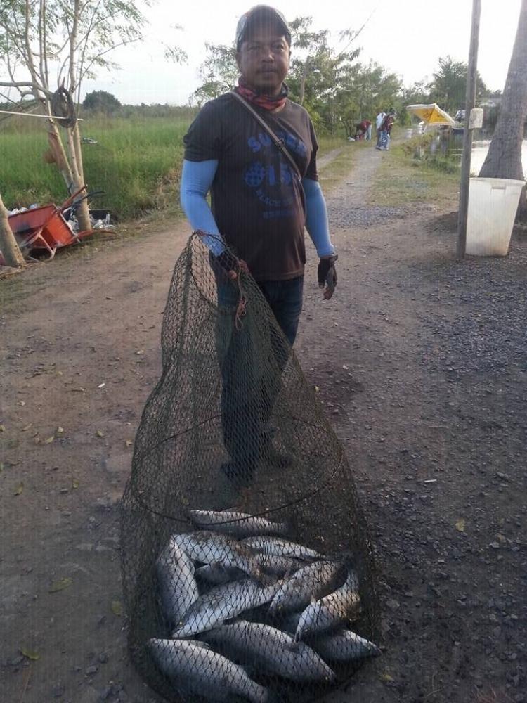 ==>ลงปลาแล้วครับ300โลวันนี้บึงเตยกะพงบุฟเฟต์ มาดูผลงานอาทิตย์ที่แล้วกันครับรวยกั