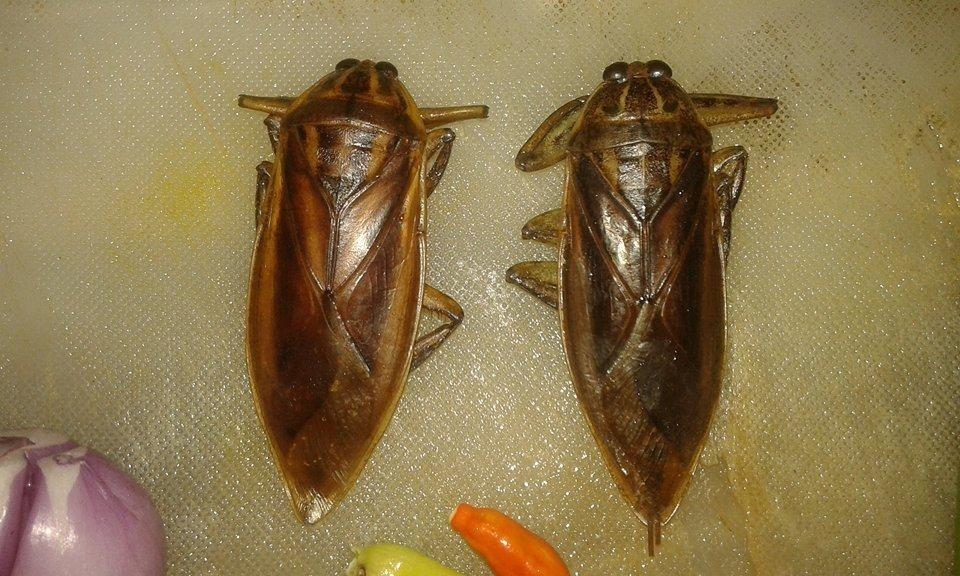น้ำปลาพริกแมลงดานา