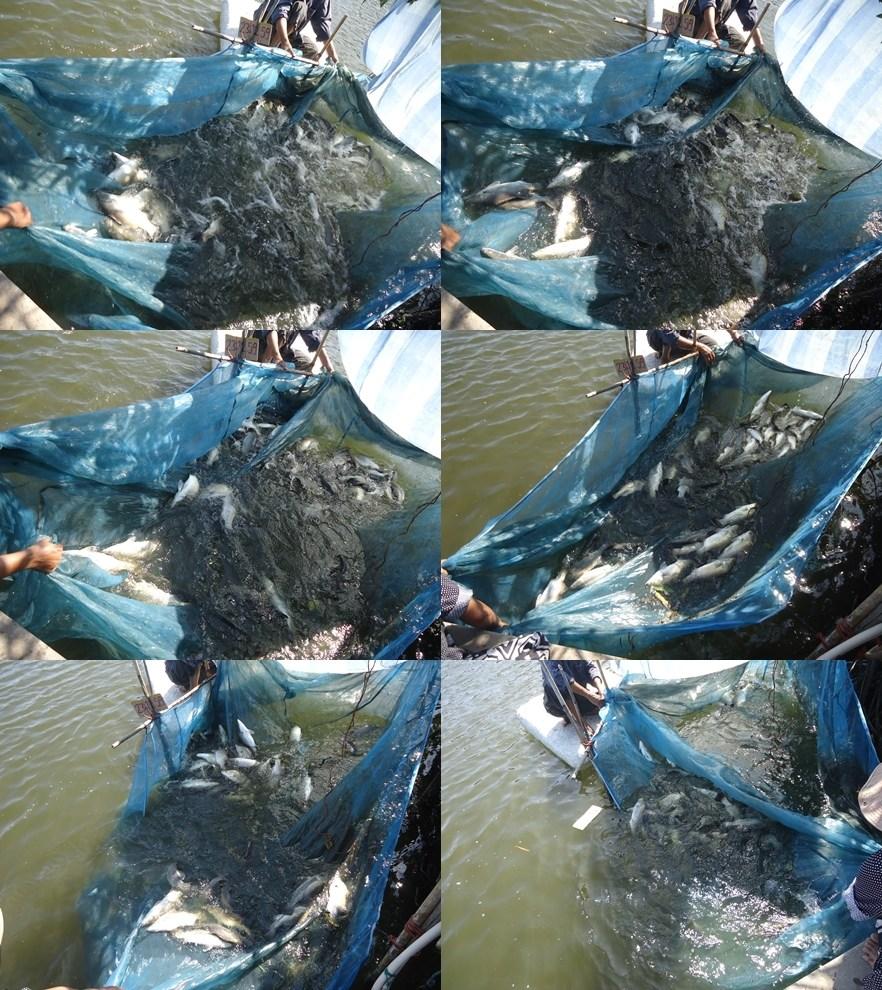 #บ่อตกปลาเพ็ญ#