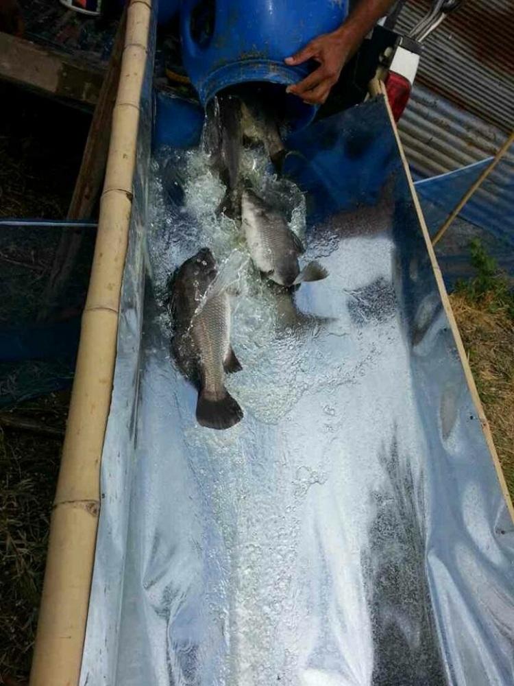 บ่อตกปลากะพง ที่ อยุธยา. เร็วๆนี้