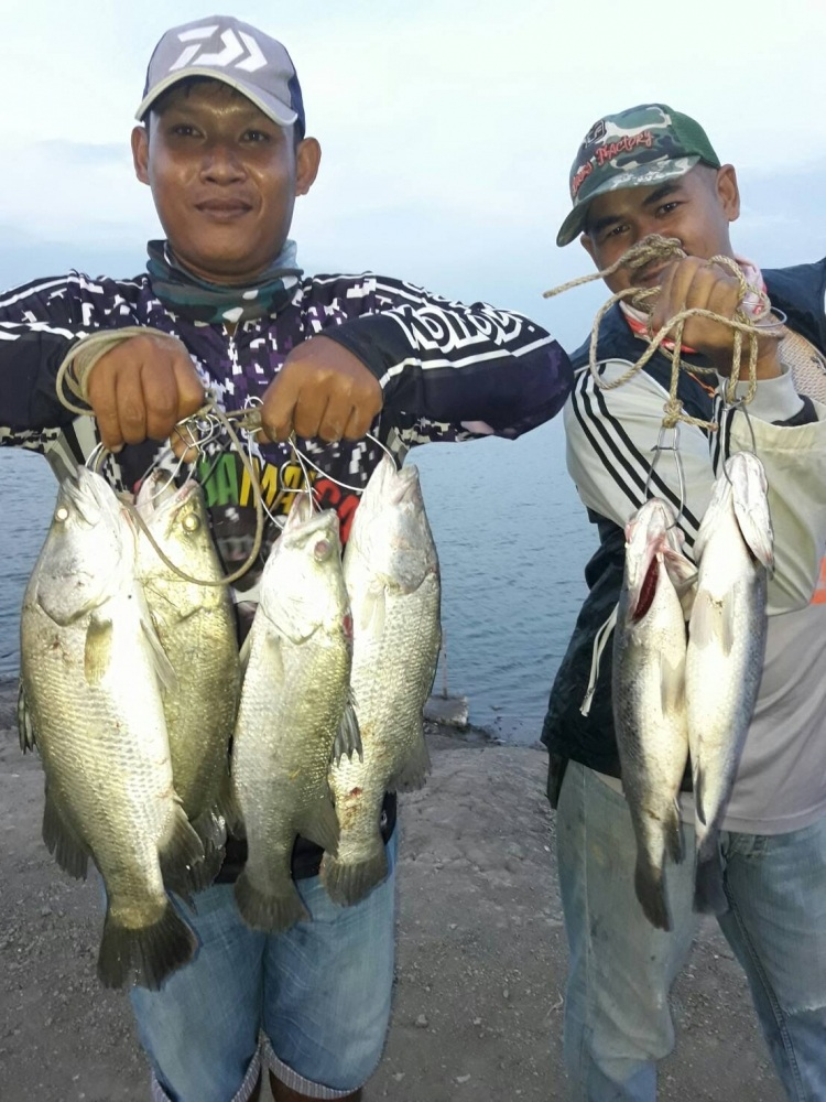 ♡♡วังกระพงน้าตุ๊ลงปลากระพงน้ำเค็ม.400.ตัว รอบนี้เอาใจนักตกปลาให้มันส์กันเลย.♡♡♡