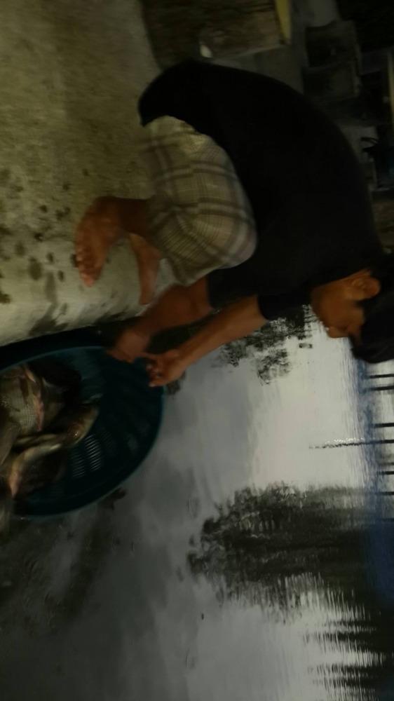 บ่อป้าเล็กCPK ลงปลาใหม่แล้วจร้า 600 กว่าโล ไซร์โตๆ