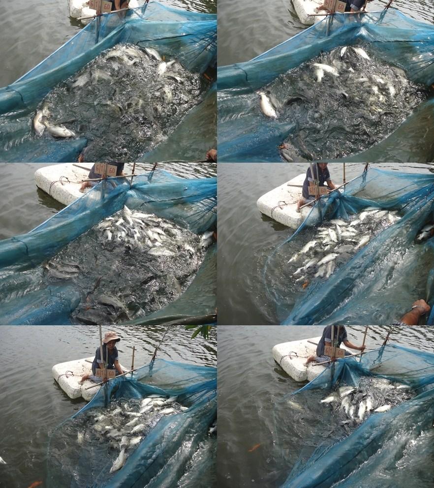 #บ่อตกปลาเจ้เพ็ญลงปลาแล้วคับ#