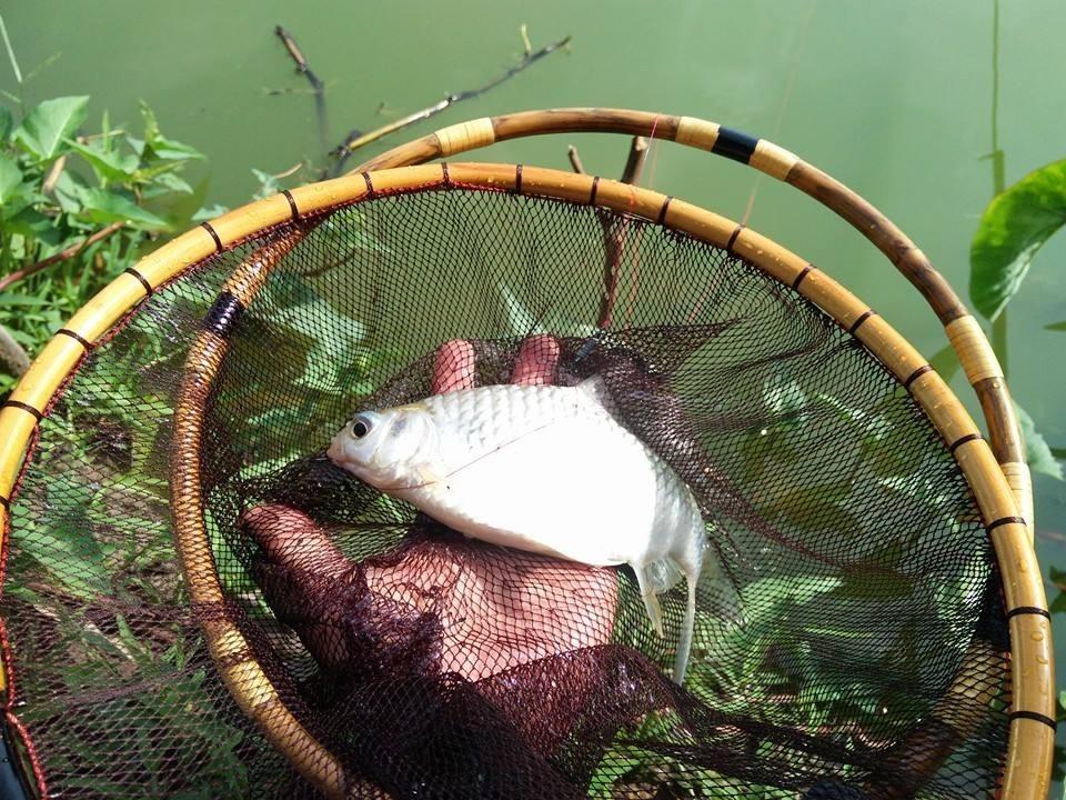 สนุกๆสไตล์ปลาเล็กปี59