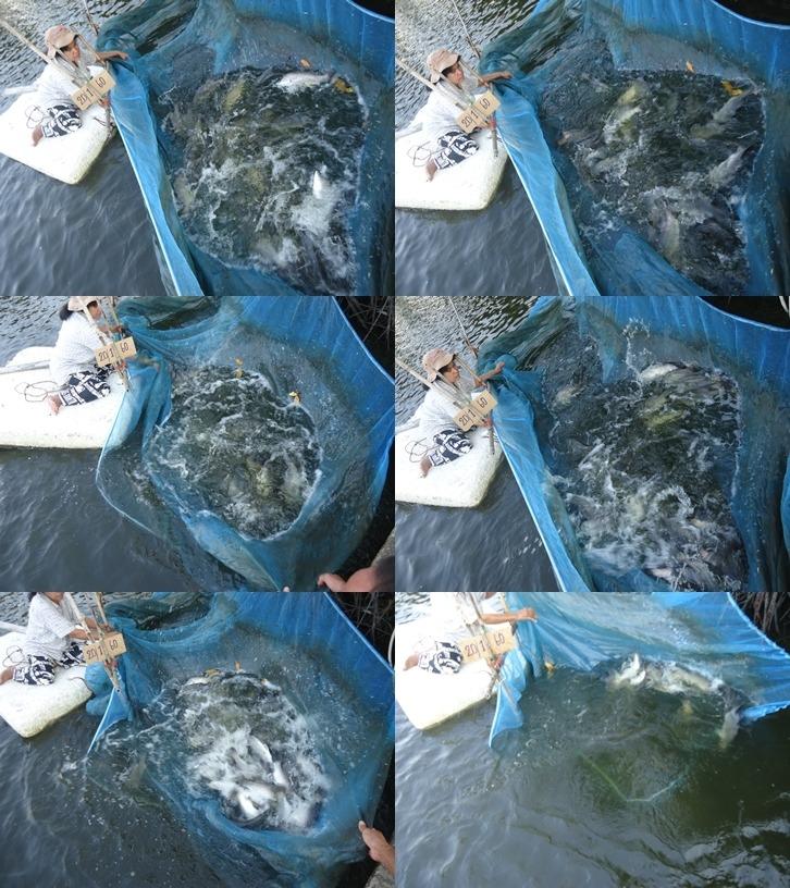 [ลงปลาบ่อตกปลาเจ้เพ็ญ]