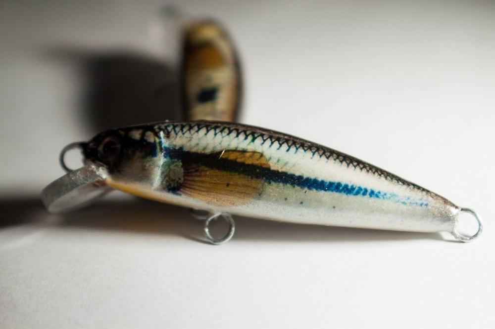 ปลาซิว  ปลากระสูบ