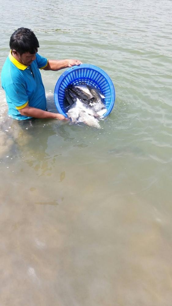♡♡วังกระพงน้าตุ๊ลงปลา ใหม่แล้วครับ.มีไซร.1.1-4.กก♡♡♡