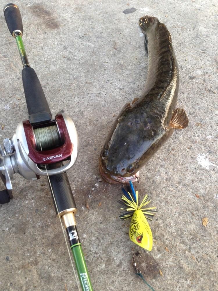 หาเพื่อน หากลุ่มตกปลาด้วยเหยื่อปลอม !! พิกัด จ.สระบุรี