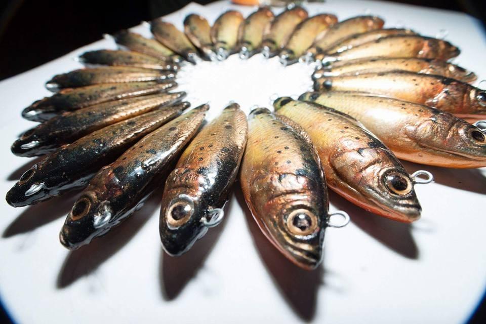 ปลาหมอไทย